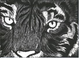 tiger close up scratch art by InnocentThora