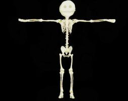 Skeleton of a stickman by Chiracy