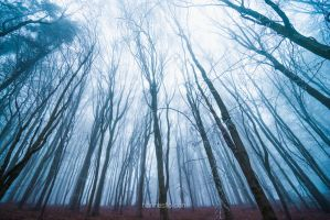 Lost Traces II by hannes-flo