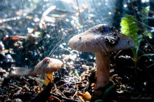 mushroom in the rain by isischneider