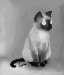 Siamese cat by Morgulian