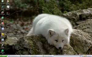Artic Fox by intotheshadows