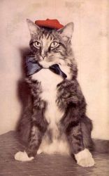 Dandy Cat by Yesterdays-Paper