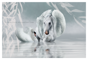 The Swan Lake by JulieBales