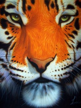 Tiger by Dolcimascolo
