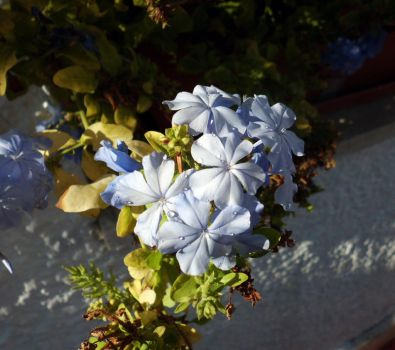 Azure flowers by WellOiled