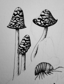 Magpie Fungi - Coprinopsis picacea - Inktober #21 by Chrysochroa