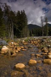 Stream with Rocks and Trees by happeningstock