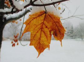 Leaves in the Snow by Introverses