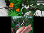 Zebra Butterflies by JadeDragon341
