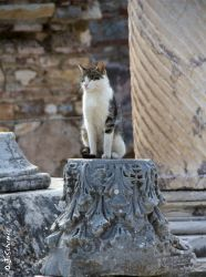 holy cat by Sockrattes