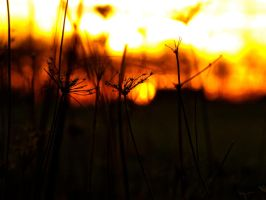 Apocalyptic Sunset by SamGrodhaus