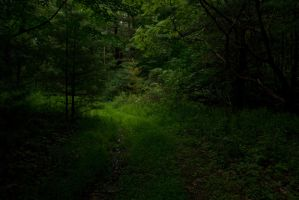 Into The Light by FOTOSHOPIC