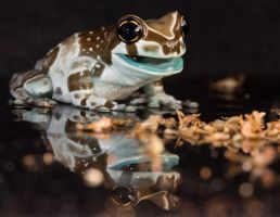Eating frog by AngiWallace