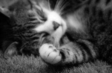 the paw... by clochartist-photo