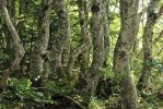 Beech Dance by organicvision