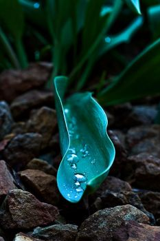 Wet Leaf by l-Beej-l