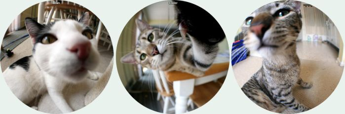 Fisheye Cats Compilation by mydigitalmind
