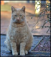 Red Cat by FrankAndCarySTOCK