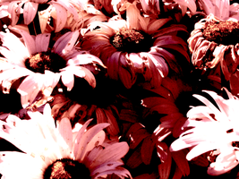 Colored Flowers 4 by TheMorr