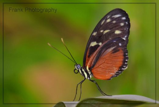 Butterfly by CaryAndFrankArts