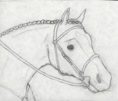 Horse Head by showyourcards
