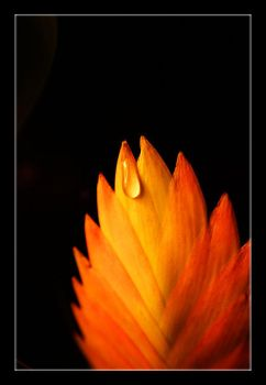 Flame by Replicante