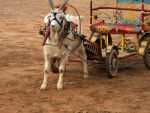Goat and Carriage by busyoldfool