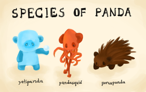 Species of Panda by Pandasquid