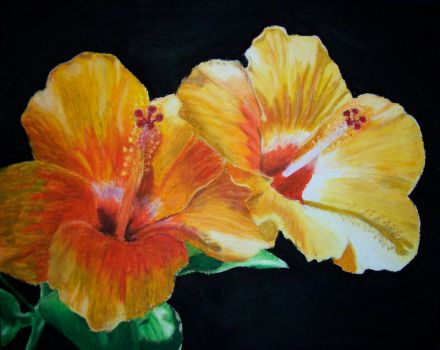 Yellow Hibiscus by HorselessHerder
