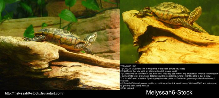 Turtle Stock 3 by Melyssah6-Stock