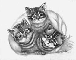 3 kittehs by winstonscreator