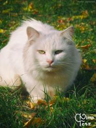 White Cat #2 :) by UAkimov09