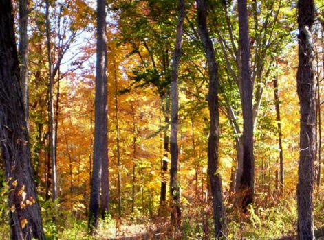 Gold In The Woods by MotherNaturesChild