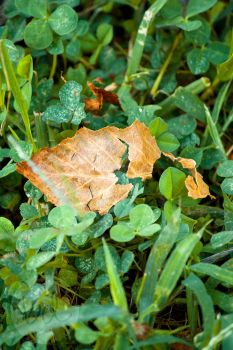 Little Leaf by allnightnoise