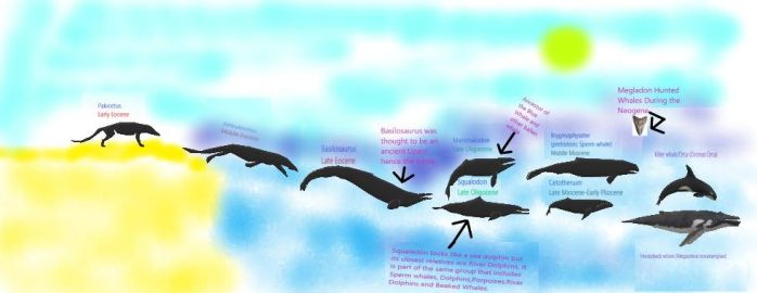Evolution of Whales by Liopurodon4x