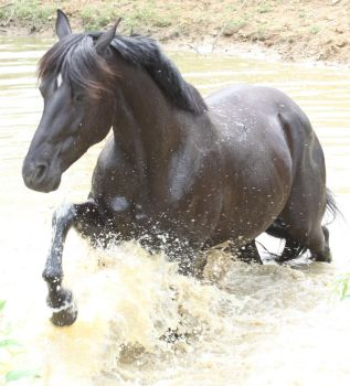Black Beauty - Water Stock 1 of 13 by Lovely-DreamCatcher