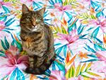 Feline Tropicale by modestlobster
