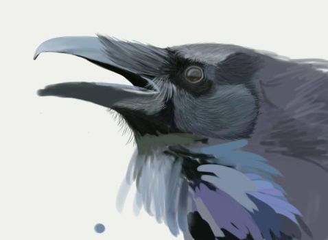 WIP Crow. Pet Portrait Example by beachgecko