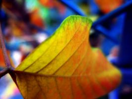 Multi-Colored Nature by jemgirl
