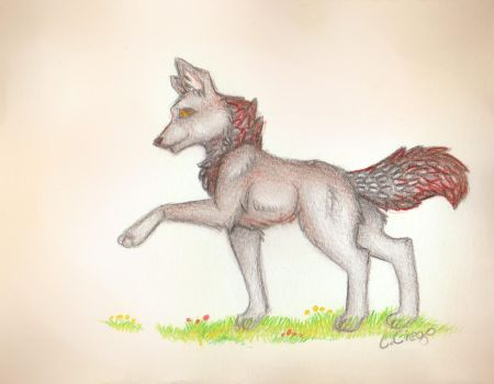 Red Wolf by CelCiego