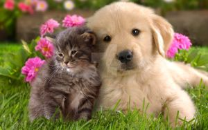 Kitten And Puppy by Weapons-Expert-Cool
