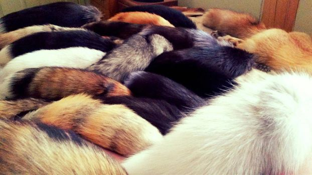 A Sea of Tails by Whitetail-Taxidermy