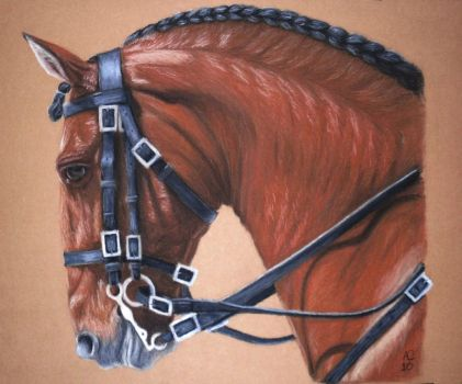 Brown horse 2 by Melwe