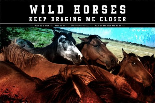 Wild Horses by dophineh