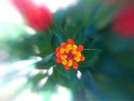 Lensbaby iPhoneography CCXLIII by LDFranklin