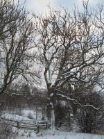 Just Winter in Melsted2 by ChepcherJones