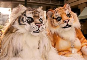 beastcub creations : tigers by LilleahWest