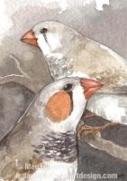 Zebra Finches ACEO by Pannya