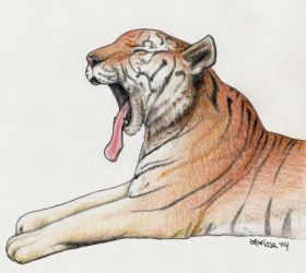 Yawning Tiger by rissdemeanour